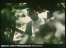 فیلم وقت چیدن گردوها