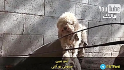 مهربانی با حیوانات نجا...