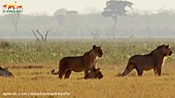 فیلم مستند در تلویزیون حیوانات شگفت انگیز