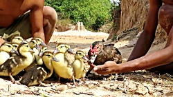 مردی از قبیله خانواده اردک را از خطر پیتون نجات می دهد