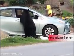 لحظه سرقت از خودرو توسط باند خرس ها!