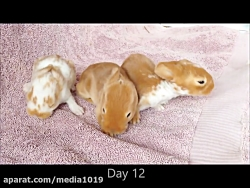 رشد و بزرگ شدن بچه خرگوش