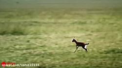 از بهترین ویدیوهای حیات وحش