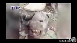 تصاویری تکاندهنده از ذبح چندین راس الاغ در اصفهان !