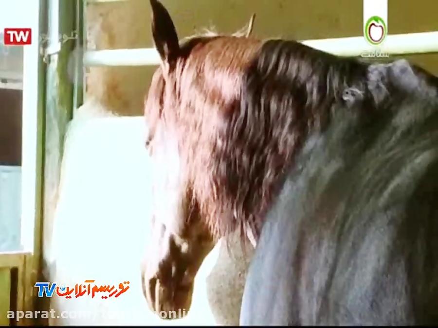 مرکز سیستان و بلوچستان   اسب سواری در استان گلستان (مستند ایران)