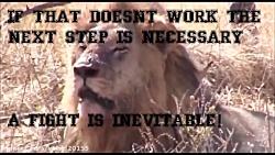 مبارزه قدرتمندترین حیوانات شکارچی حیات وحش