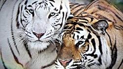 8 حمله شوکه کننده حیوانات به انسان