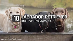 10 تا از برترین نژادهای سگ در کشورهای مختلف