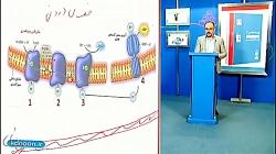 تدریس بی نظیر زنجیره انتقال الکترون و تخمیر توسط دکتر صفا