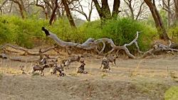 مستند شکارچیان آفریقا: چشمه های داغ