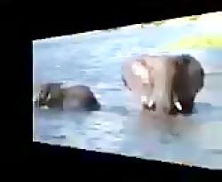 نبردهای خونین حیوانات