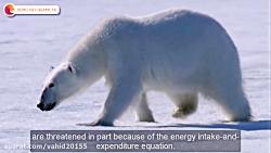 قدرتمندترین حیوانات شکارچی در حیات وحش