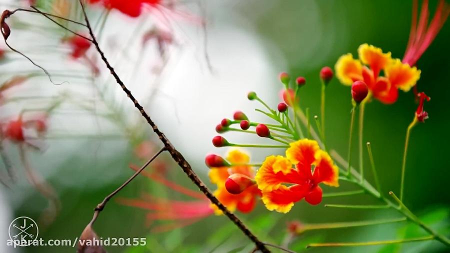طبیعت زیبا همراه با موسیقی آرامشبخش