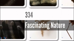 334- طبیعت دلربا