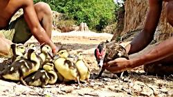 نجات اردک و جوجه ها توسط انسان از حمله مار