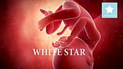 بارداری هفته به هفته | MicroSoftco.ir