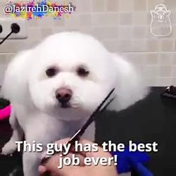 آرایشگاه حیوانات