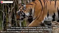 قدرتمندترین شکارچیان حیات وحش