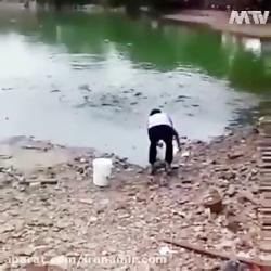 ویدئوی جالب از هجوم حیرت انگیز ماهی ها برای خوردن غذا