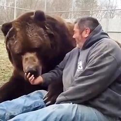خرس گریزلی بزرگترین نوع خرس