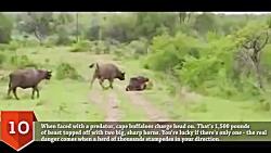 10# مرگبارترین حیوانات در حیات وحش جهان