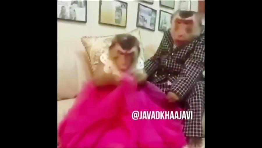 دوبله دونی ۱۰ - سلطان دوبله کمدی مشهدی - جواد خواجوی - قسمت چهارم