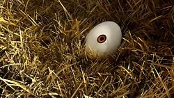انیمیشن کوتاه تخم مرغ ها تغییر می کنند