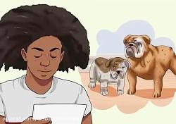 تعیین سن سگ به صورت علمی و ساده