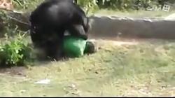 دریدن انسان توسط خرس گریزلی+18