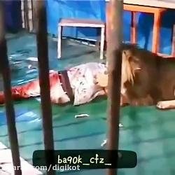 حمله شیر به یک مرد درون قفس و جنگ دیدنی خروس قهرمان با سگ