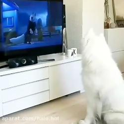 تاثیر مخرب تلویزیون