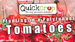 آموزش کاشت گوجه فرنگی در گلخانه خانگی (زیرنویس فارسی))