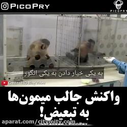 واکنش جالب میمون ها نسبت به تبعیض !