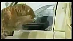 حوادث باغ وحش: حمله حیوانات وحشی در باغ وحش +18