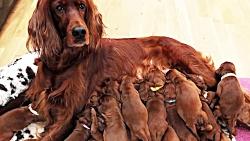10 حیوان جهش یافته که از انها فیلم گرفته شده