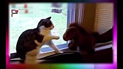 خنده دار. با گربه جدید 2017  fanny by cat