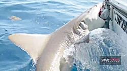 صید ماهی غولاسا: شکار ماهی گروپر جالوت