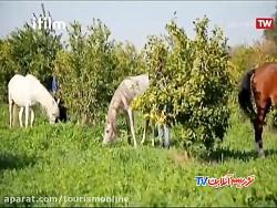 خوزستان: آداب و رسوم ، موسیقی و غذا (ایران شناسی)