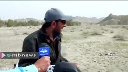 هجوم ملخ های صحرایی به سه ناحیه در شهرستان سیریک