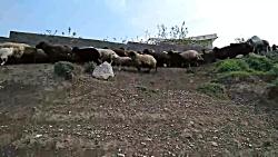 روستای ناندل Nandal Village