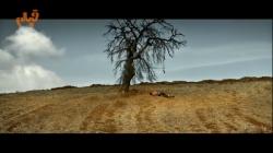 نگاهی به فیلم درخت گلابی وحشی، به کارگردانی نوری بیلگه جیلان