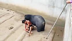 حمله وحشیانه خرس به انسان