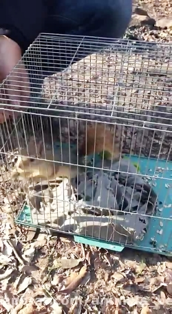 آزادسازی سنجاب در جنگل بلیرون آمل