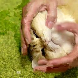 بامزه ترین و قشنگ ترین و خپل ترین گربه ی روی زمین