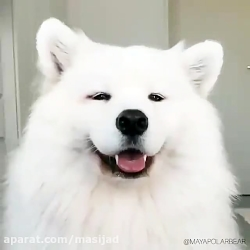 اولین سگ من در دنیا