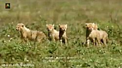 مستند بچه های حیوانات - ...