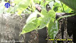 آموزشی کاشت صحیح درخت توسط حکیم دکتر روازاده