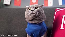 گربه در جام جهانی !!!