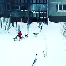 #سگ چه شانس اورد !