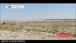 گزارش علی سعیدی خبرنگار صدا و سیما از هجوم ملخها